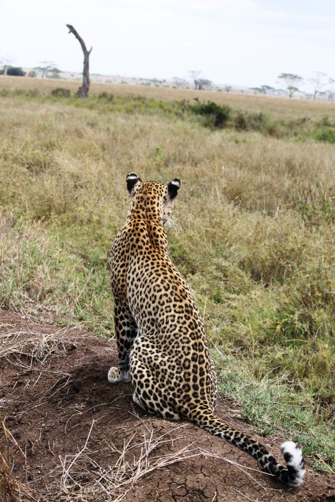 Tanzania 770